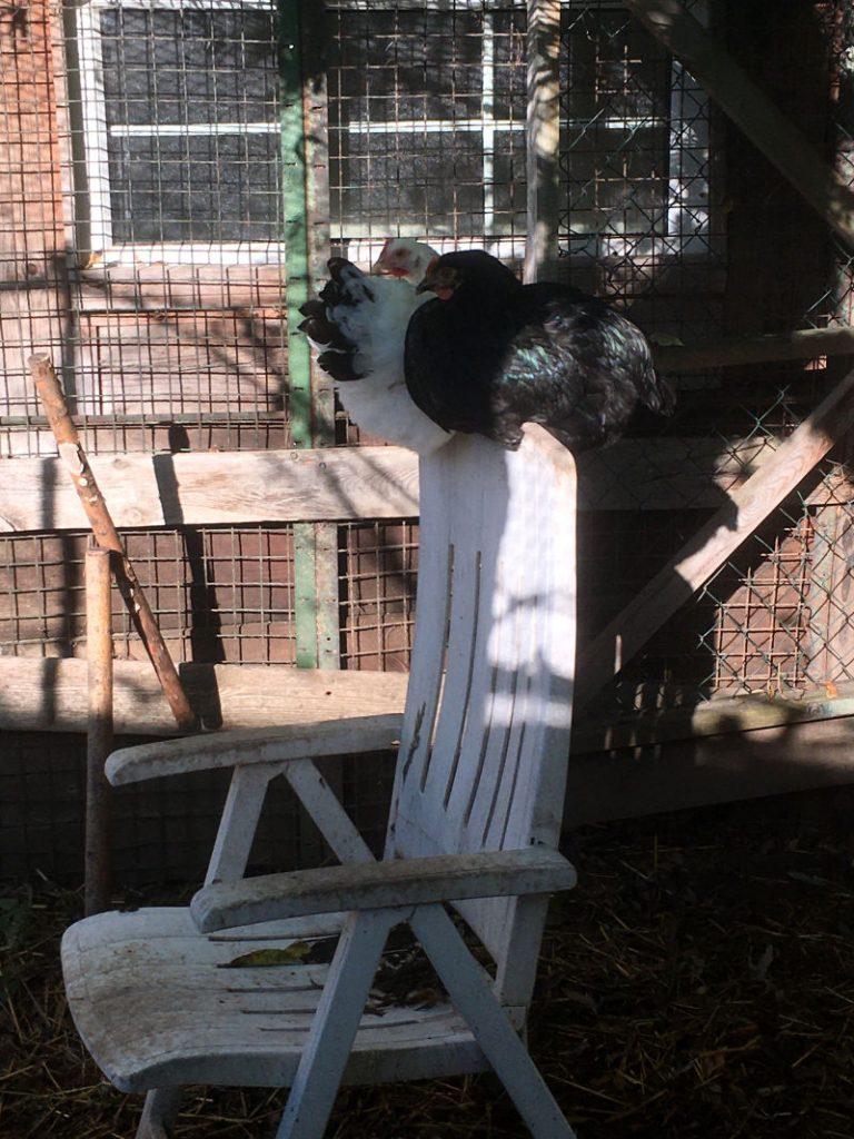 Gartenmöbel Hühnerstall