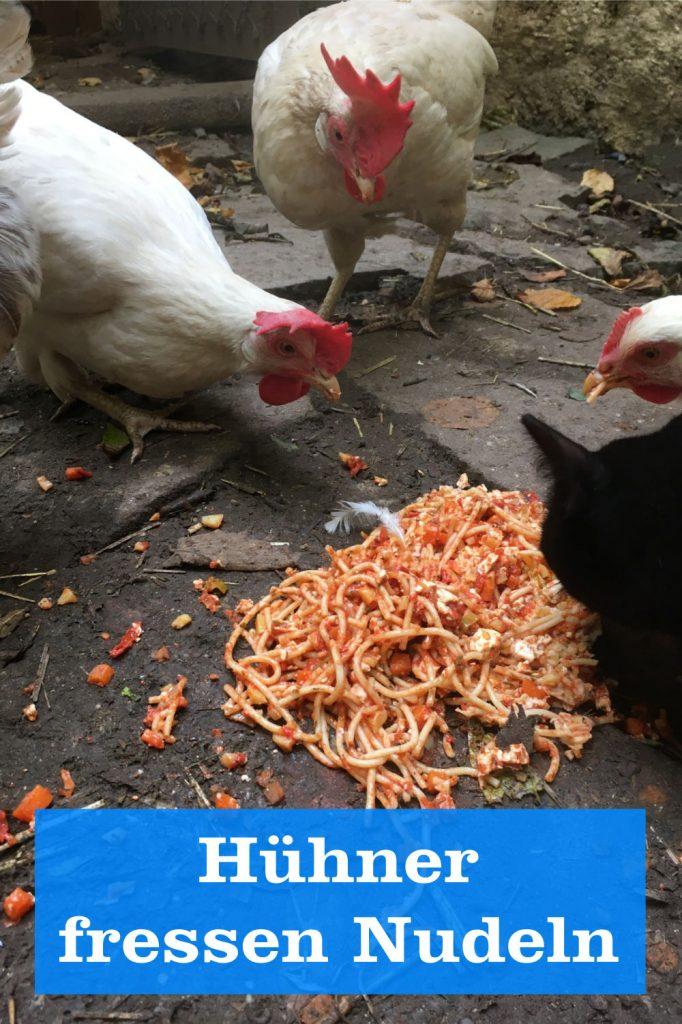 Hühner fressen Nudeln