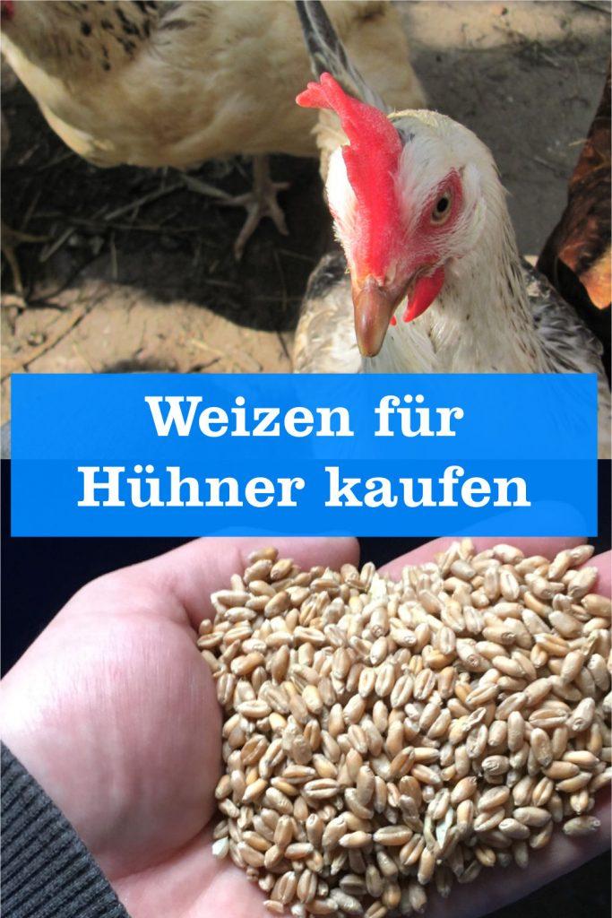 Weizen für Hühner kaufen