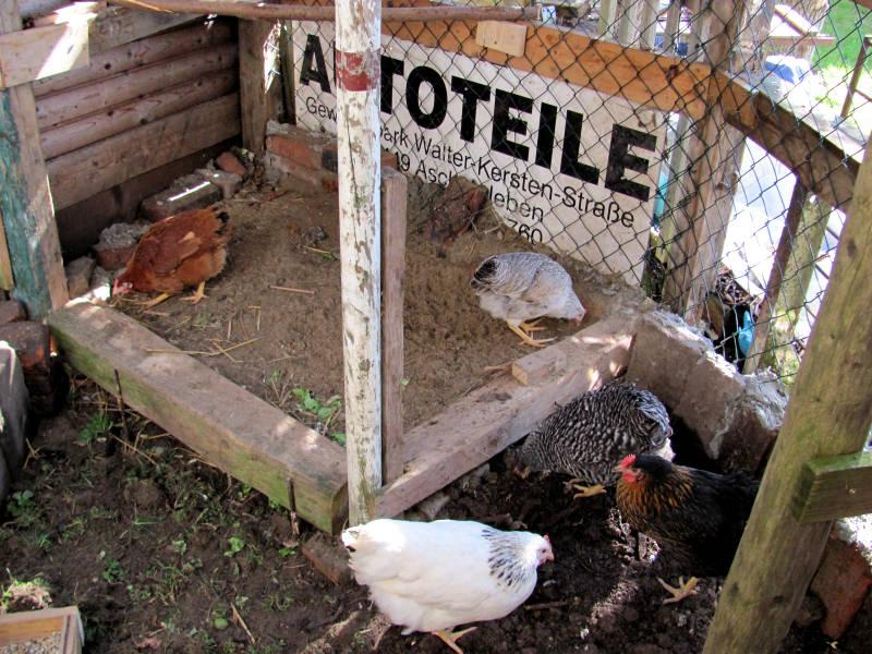 Sandbad Hühner